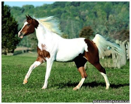 самые красивые породы лошадей в мире фото