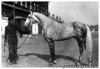 Самые известные и знаменитые лошади в истории 43502768