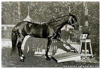 Самые известные и знаменитые лошади в истории 72589408